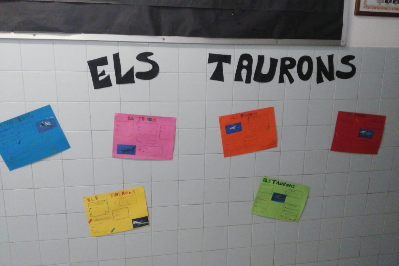 Projecte dels Taurons a 2n de primària!